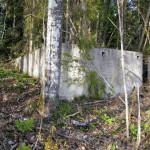 Husgrund i skogen